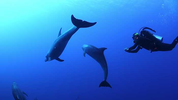 <i>Diving with dolphins</i>